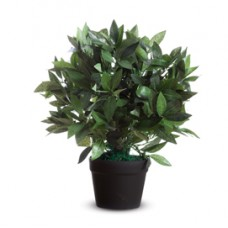 Pianta ornamentale - lauro - H50cm - Paperflow